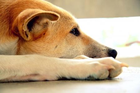 Stray dog living alone
