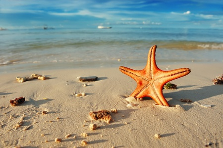 Photo for Starfish on a beautiful beach - Royalty Free Image