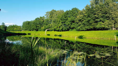 Photo for summer landscape with a mirror in the lake. green trees grass and blue sky reflecting in a peaceful lake with water grass. Green grass in the foreground - Royalty Free Image