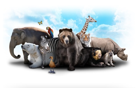 A group of animals are grouped together on a white background  Animals range from an elephant, zebra, bear and rhino  Use it for a zoo or friends concept