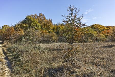 Autumn panorama of Cherna Gora (Monte Negro) mountain, Pernik Region, Bulgaria