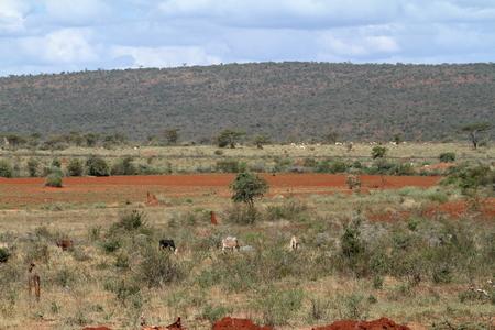 The savannah and bushland in Kenya