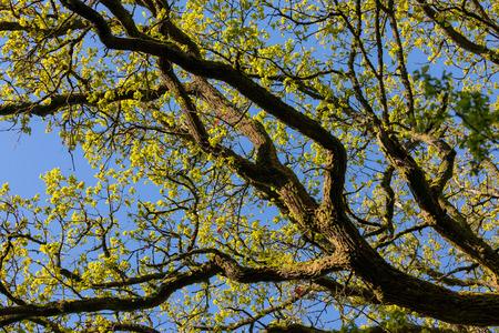 Photo pour The green forest in spring - image libre de droit
