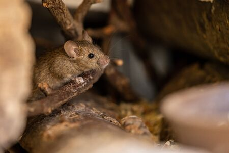 Photo pour A adorable and cute little mouse - image libre de droit