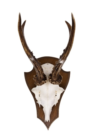 Roebuck horns as wall decoration isolated on a white background