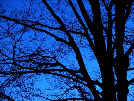 A barren tree silhouetted against a clear night sky.