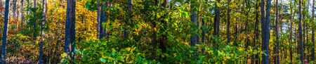 Photo pour Panoramic view of the forest in autumn - image libre de droit