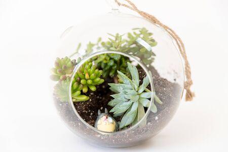 Photo pour variety succulents round glass terrariums image - image libre de droit