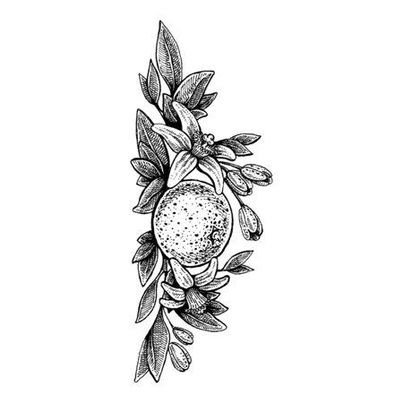 Illustration for Wedding invitation template, egology concept, vegan food, cafe, restaurant, illustration for orange juice package - Royalty Free Image