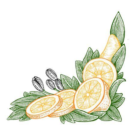 Illustration pour Wedding invitation template, egology concept, vegan food, cafe, restaurant, illustration for orange juice package - image libre de droit