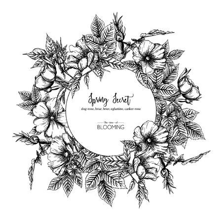 Illustration for Dog-rose, briar, brier, eglantine, canker-rose. Template for wedding invitation, greeting card, banner, gift voucher. Graphic drawing, engraving style. Vector illustration in black and white. - Royalty Free Image