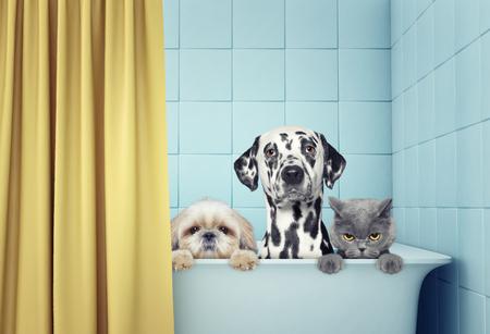 Photo pour two dogs and cat in the bath - image libre de droit