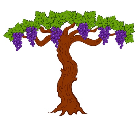painted grapes and leaves on a tree vector