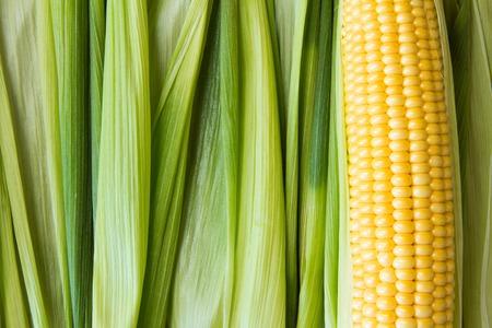 Foto für Ripe yellow corn grains on cob and green leaves. Closeup. - Lizenzfreies Bild
