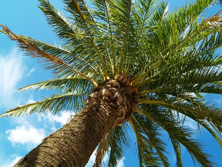Palm on summer