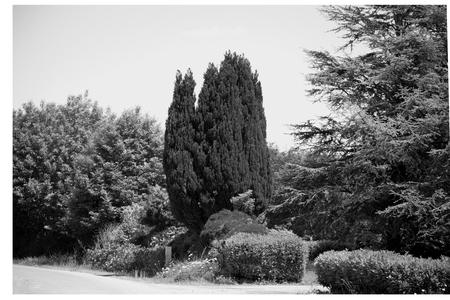 Varied tree cypres.
