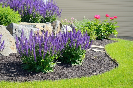 Photo for Salvia Flowers and Rock Retaining Wall at a Residential Home - Royalty Free Image