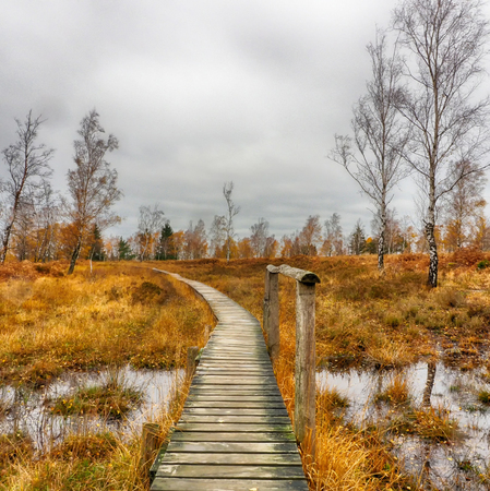 Wooden hiking trail through the Struffelt moorland in Germany