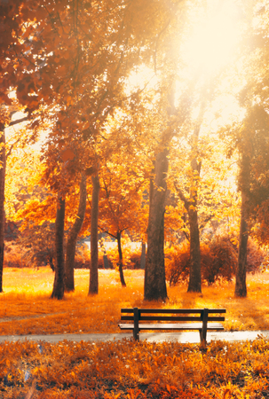 Foto per Empty bench in the park, in autumn golden and yellow colors; autumn background - Immagine Royalty Free