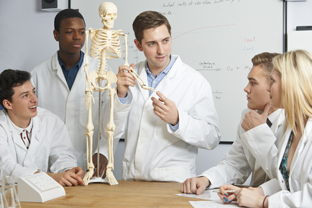 Teacher With Model Of Human Skeleton In Biology Class
