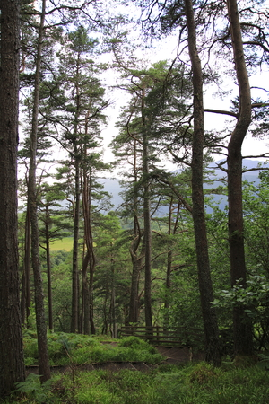 wood, forest at the Fall of Foyers, with a view of Loch Ness