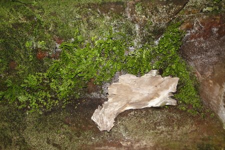 Rocks with fern and moss covered with a lonesome little piece of wood