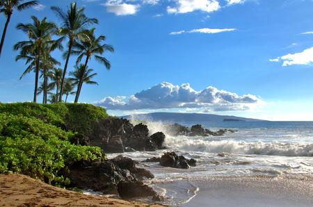 Foto de Tropical Hawaiian beach with palm trees - Imagen libre de derechos