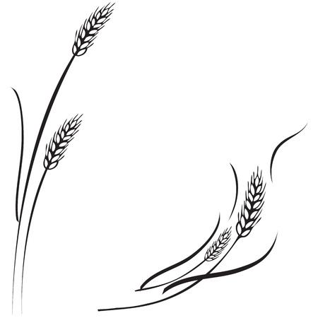 Ilustración de Vector black and white illustration of a few ripe wheat ears. Can be used as frame, corner or border design element. - Imagen libre de derechos