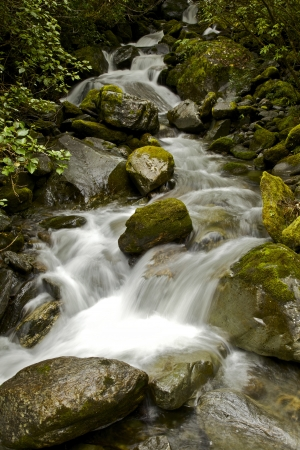 Stream in the temperate rainforest around the Fox Glacier in New Zealand