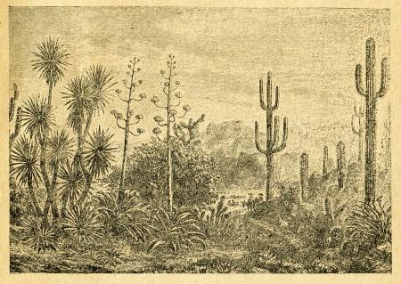 Mexican landscape - old illustration by unknown artist from Botanika Szkolna na Klasy Nizsze, author Jozef Rostafinski, published by W.L. Anczyc, Krakow and Warsaw, 1911