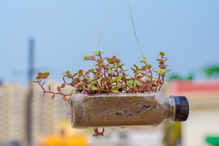 Photo pour hanging flower pot of plastic bottle, with some phulwari in it, isolated, copy space. - image libre de droit