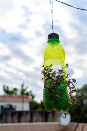 Photo pour hanging flower pot of plastic bottle, with some phulwari in it, isolated, copy space. A hanging garden. - image libre de droit