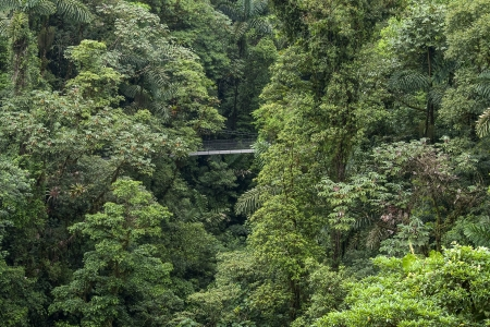 Rainforest in Costa Rica with hanging bridge