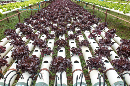 Hydroponics vegetable small garden