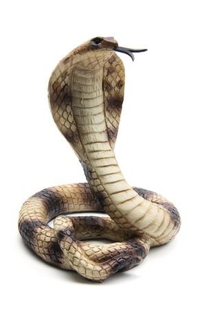 Cobra on White Background