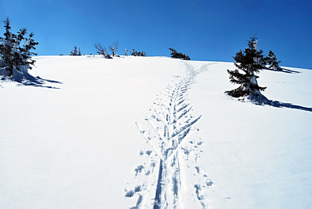 cross-country skiiin trail in winter Jeseniky mountains with isolated tree and clear sky