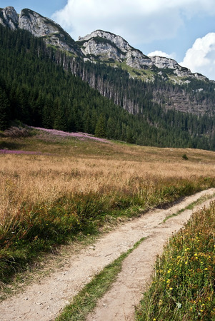 Dolina Kondratowa valley with flowering meadow, hiking trail, sharp limestone hill above and blue sky with clouds in polish part on Czarwone Wierchy mountain group in polish part of Western Tatras mountains