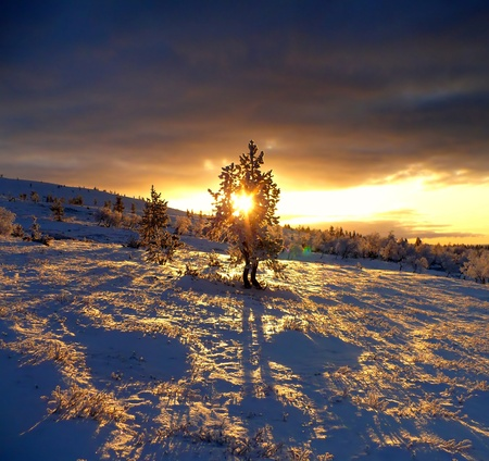 Beautiful sundown from lapland with dominant solitude tree