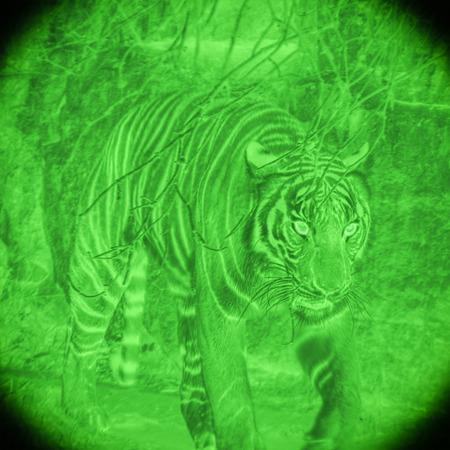 Wild tiger at hunt by night vision illustration.