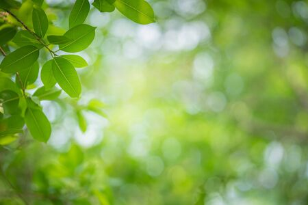 Foto de Close up nature view of green leaf on greenery blurred background under sunlight in garden with copy space for text. Natural green plant landscape for ecology and fresh wallpaper concept. - Imagen libre de derechos