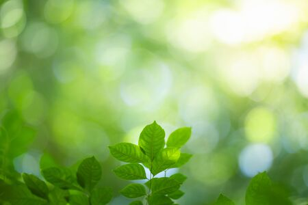 Photo pour Green nature background. Closeup view of green leaf with beautiful bokeh under sunlight for natural and freshness wallpaper concept. - image libre de droit