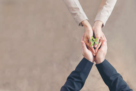 Photo pour Sustainable Collaboration Green Ecology Business Company. Trust Partners Team Welcome hands holding green plant together. Hands Stacked of Partners with Green Sustainable Develop Business Concept. - image libre de droit