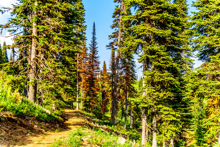 A hiking trail on Tod Mountain near the alpine village of Sun Peaks in the Shuswap Highlands of the central Okanagen in British Columbia, Canada