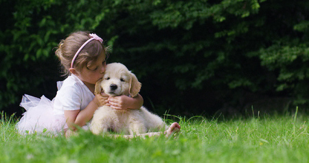 Foto per Cute toddler little two years old girl gives a golden retriever puppy on a green widow in a woods. Concept of love for nature, protection of animals, innocence, fun, joy, carefree childhood. - Immagine Royalty Free