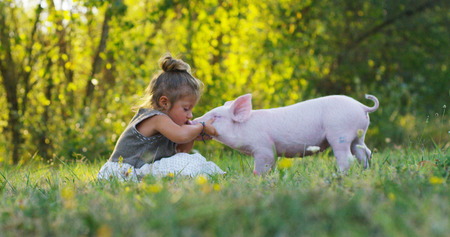 Foto per Piggy piglet on a green meadow. concept of sustainability, love of nature, respect for the world and love for animals. Ecologic, biologic, vegan, vegetarian - Immagine Royalty Free