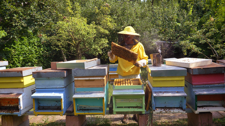 Foto per The beekeeper looks after bees, honeycombs, a lot of honey, in a protective beekeeper's beast. Concept: bee hive, pure natural product, useful product, yellow golden honey, swarm of bees, hardworking. - Immagine Royalty Free