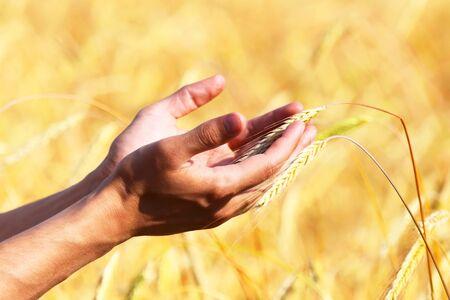 Photo pour Hands of a farmer with wheat ear - image libre de droit