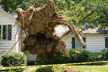 Photo pour Uprooted tree fell on a house after a serious storm came through - image libre de droit