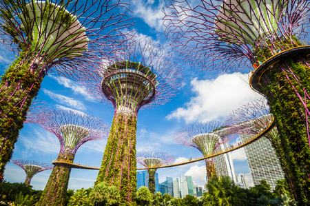 Photo for Supertree grove at garden by the bay in singapore - Royalty Free Image