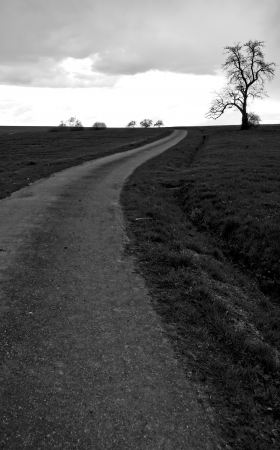 a way and a tree on a overcast day